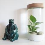Votre intérieur devient zen grâce aux plantes aquatiques